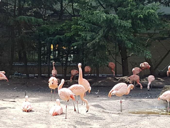 Avifauna Today Was A Good Day Daylight Sand EyeEm Selects Flamingo Bird Tree Flock Of Birds Animal Themes