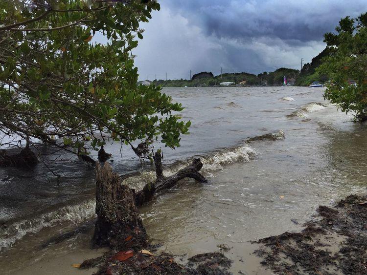 Shoreline at Rotary Park Suntree Suntree Florida Indian River Indian River Lagoon Shoreline Breezy Day