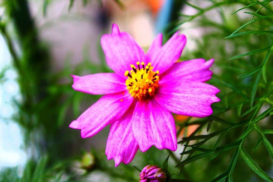Violet Flower ....... Amaturephotography