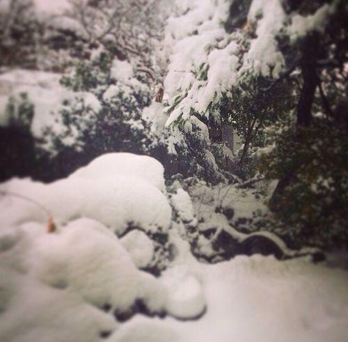 しかし積もったな… Snow Niigata-shi Streamzoofamily Beautiful