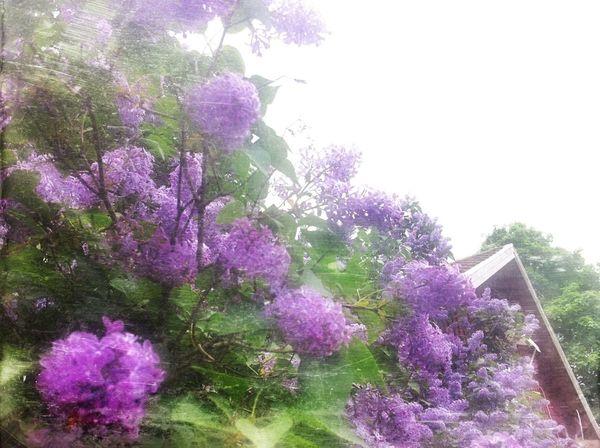 In My Garden I Love Trees