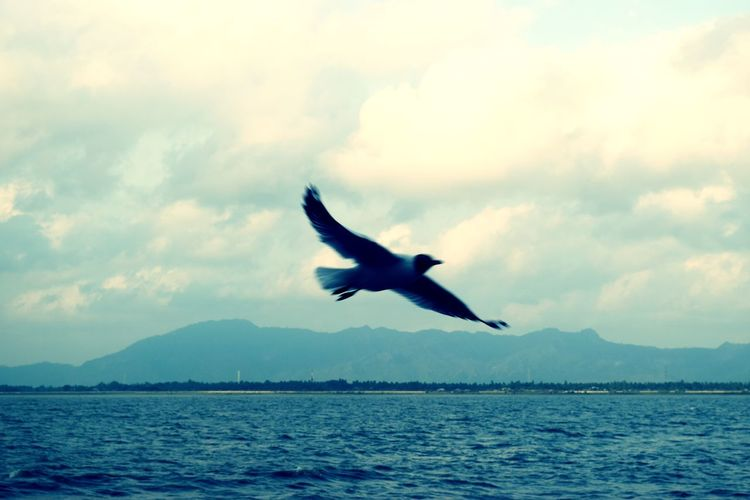 Bird Spread Wings Water Flying Bird Of Prey Mountain Sea Humpback Whale Mid-air Seagull My Best Photo