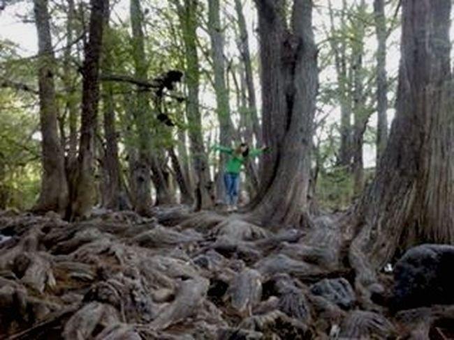 Borroso Trees Green Airfresh Musas Fun Friends Life Enjoying Life Paisaje