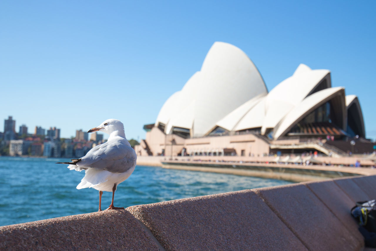 bird, animal themes, one animal, seagull, architecture, building exterior, animals in the wild, outdoors, clear sky, built structure, day, animal wildlife, water, perching, river, retaining wall, sea bird, nature, harbor, no people, sky, city, spread wings