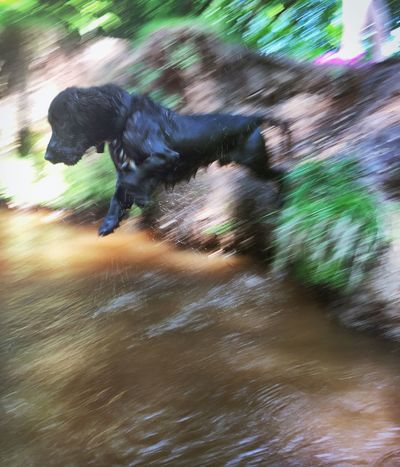 Warm Weather Dog Walk Fetch Family Time Dogs Of EyeEm Dogs Life Splashing Splash Jumping Water Streams Forest Photography New Forest, Hampshire. UK Country Life Blurred Motion Blurred Speed Need For Speed Fresh On Eyeem  Fresh On Eyeem  Godshill Hampshire Capturing Motion