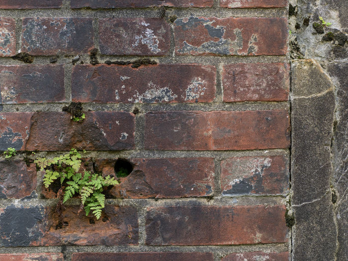 Architecture Brick Brick Wall Brick Wall Built Structure Full Frame Geometric Shape Get Getting Inspired Joe Didario Joedidariophotography Joedidariophotography Olympus OM-D EM-1 Outdoors Pattern Plant Rectangle Solitude Survival Wall - Building Feature