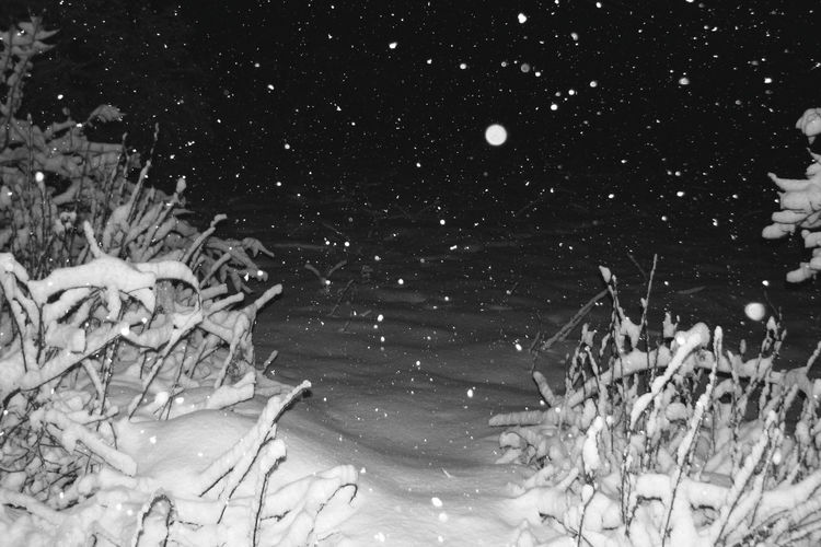 Blizzard Close-up Cold Temperature Frozen Ice Motion Nature Night No People Outdoors Plant Snow Snowflake Snowing Tranquility Tree Water Winter