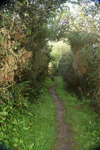 One of the many 'secret' pathways along the South West Coastal Path in Cornwall. This one is just above Perranuthnoe, Cornwall, UK Cliff Path Cornwall Country Path Gateway Greenery Kissing Gate Perranuthnoe South West Coast Path