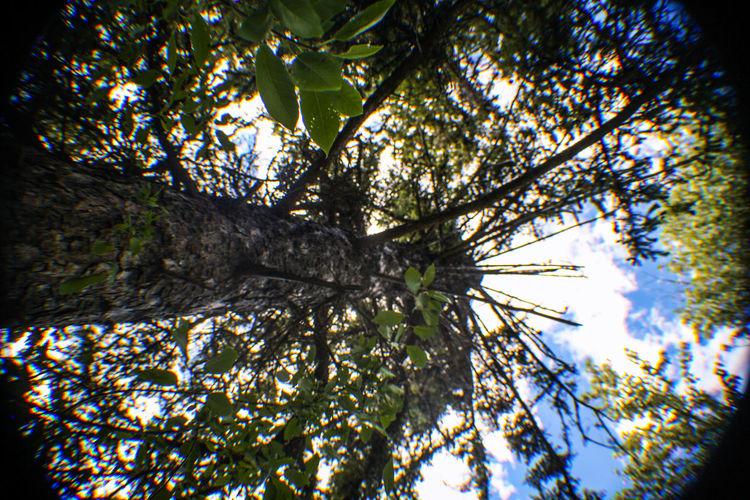 Taking Photos Enjoying Life Big Sky Country Treescape Tree Trunk Tree Art Trees Nature Photography