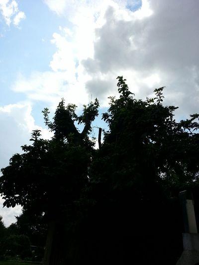 TreePorn Tree Sun Schattenspiel