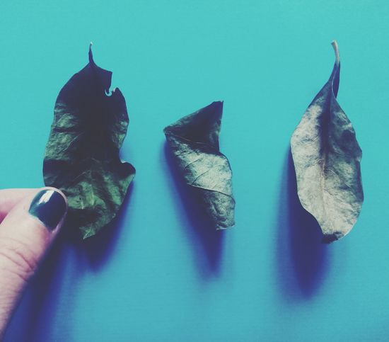 Same same but different Autumn Leaves Fall Beauty Getting Inspired From My Point Of View Check This Out Taking Photos Leaves_collection Simplicity Still Life Deceptively Simple Eyeemphoto A Bird's Eye View Beautifully Organized Visual Creativity Autumn Mood