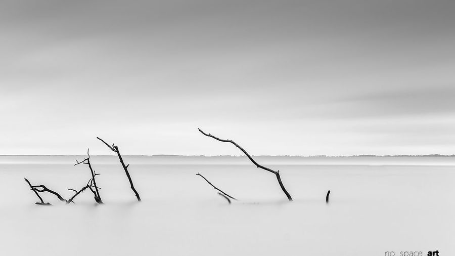 Bare tree in calm sea against sky
