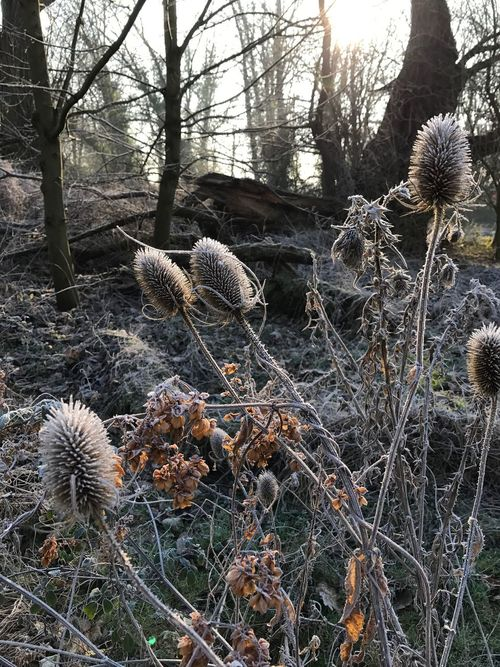 Seed heads in the winter sunshine Nature Growth Plant Tree Outdoors Beauty In Nature Field Tranquility Day No People Seed Head Frosty Mornings Fragility Close-up
