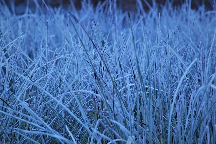 Backgrounds Beauty In Nature Blue Close-up Day Field Fragility Frosty Grass Frosty Grass Blades Full Frame Grass Growth Nature No People Outdoors Sky