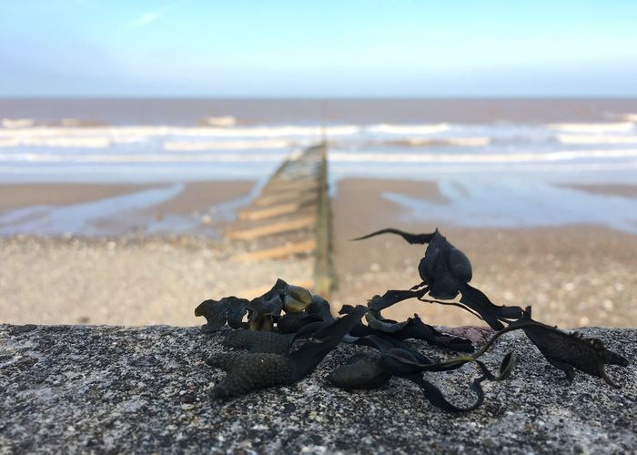 The Great Outdoors - 2017 EyeEm Awards Looking Over Water Sea Beach Seaweed Seawall Bladderwrack