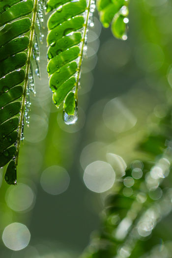 Green leaf,