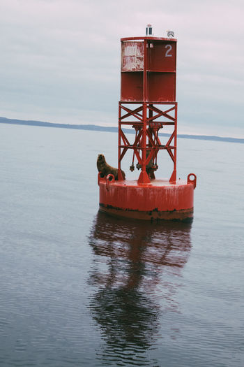 A wild seal hoisted atop a buoy in the ocean
