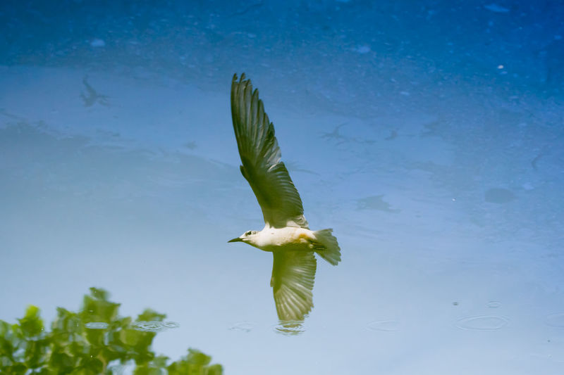 Reflection Bird Bird Reflection In The Water Flying Bird Photography Birds Water Animal Wildlife One Animal Animals In The Wild Green Color Blue No People Nature Outdoors Day Animal Themes Sky Close-up UnderSea Bird Of Prey AI Now EyeEm Ready   EyeEm Ready