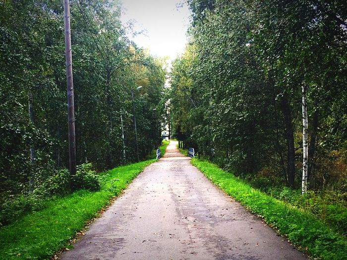 Tree The Way Forward Tranquil Scene Diminishing Perspective Tranquility Growth Green Color Scenics Long Day Nature Non-urban Scene Vanishing Point Treelined Outdoors Footpath Solitude Beauty In Nature Narrow Empty Road