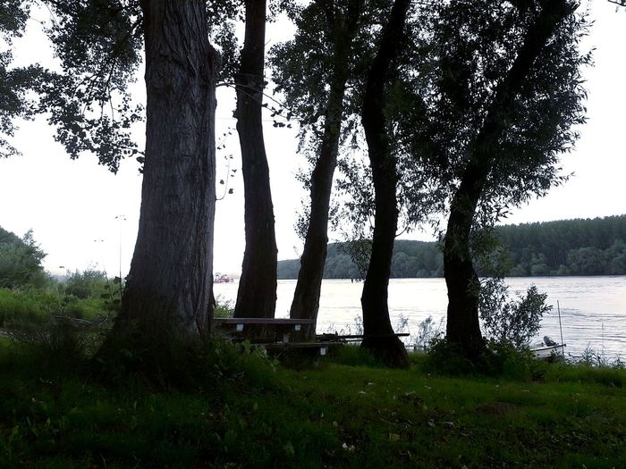 No People Outdoors Nature Day Photography Serbia Wood Riviera Table And Bench Summer Tired Tree Water Rural Scene Lake Tree Trunk Sky Grass Landscape