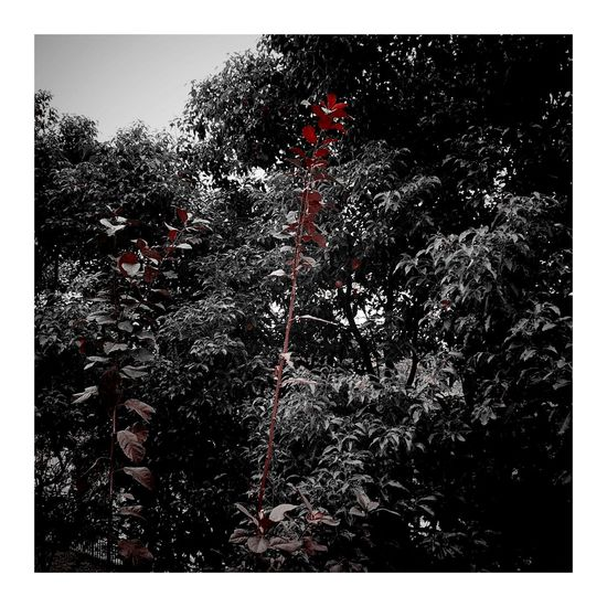 Red Sky 秋天 CityLifeStyle Vignette Art Shanghai, China 秋色 Autumn Colors Vignette 南园滨江绿地 Outdoors Autumn Leaves