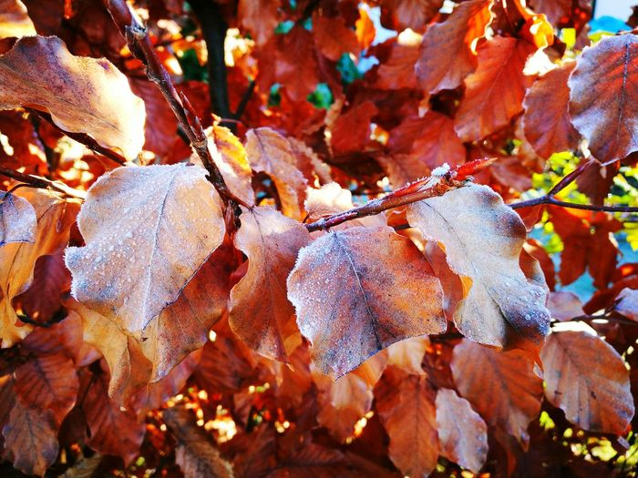 Leaves Nature Autumn Colors Herbst-Impressionen 🍁 Autumn🍁🍁🍁 Осень 🍁🍂 Herbst🍁 Herbst 2016 Autumn 2016 Dezember 2016 Kreuztal Germany Today Germany Photos Deutschland Ist Schön HuaweiP9Photography Huawei P9 Plus HuaweiP9plus HuaweiP9 Huawei P9 Photos Huawei P9 Leica HuaweiP9leica Huawei Leica Листочки листья Herbststimmung