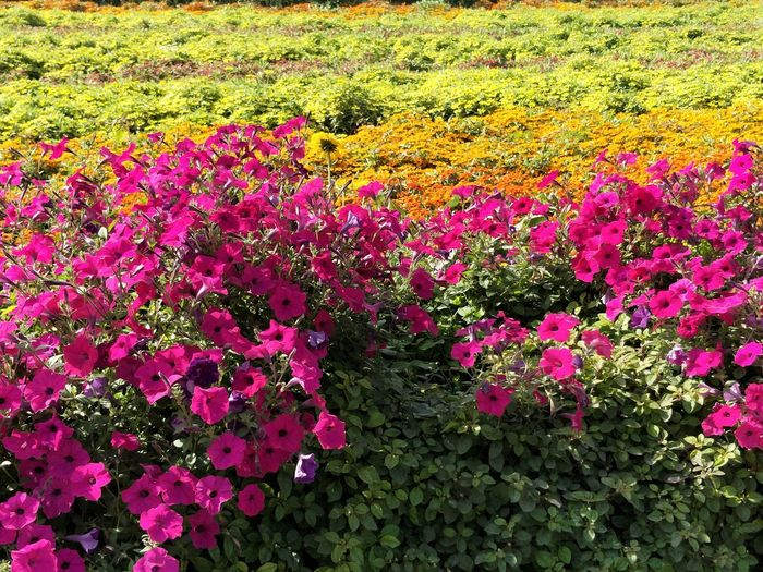 Nature Growth Beauty In Nature No People Outdoors Plant Day Flower Tranquility Field Grass Scenics Fragility Freshness Tree Close-up