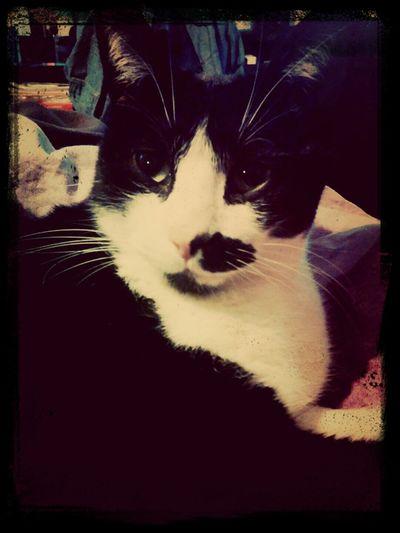 j'aime mon chat :p