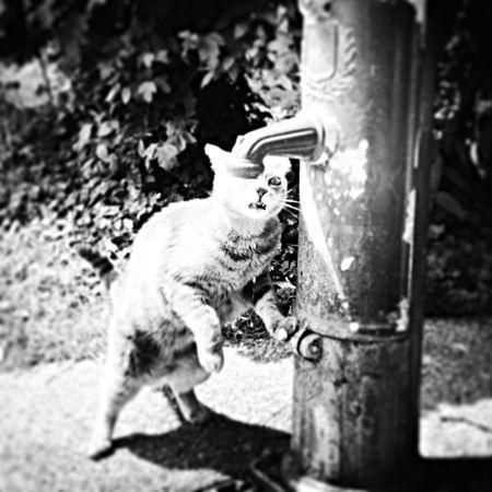 Cat♡ Black & White Drinking