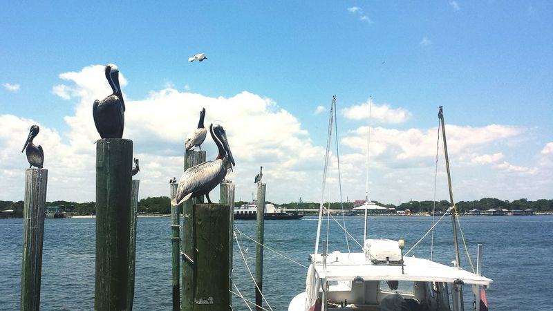 Jacksonville Jacksonville Florida Seafood Market Pelicans St Johns River Ferry Boat Pilings Shrimp Boat