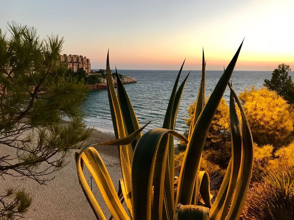Salou Beach Agave Plant Sea Water Nature Beach Tranquility Beauty In Nature Horizon Over Water No People Scenics Tranquil Scene Outdoors Sky Sunset Day