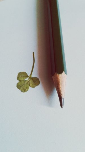 Small Small Flowers Clover Art Sweetcolor