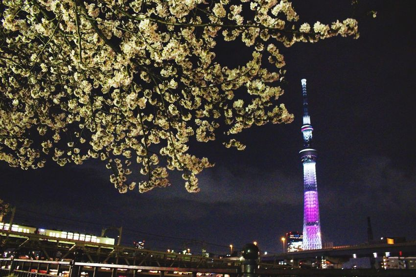 スカイツリー Hello World Taking Photos Skytree Tokyo Asakusa Japan Japan Photography Cherry Blossoms Cherry Blossom Flower Flowers Light Light Up Your Life Lights