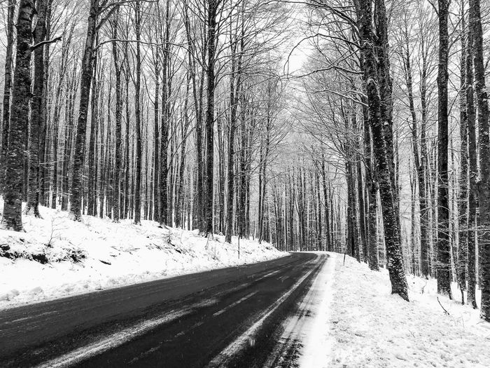 Road amidst snow covered trees in forest