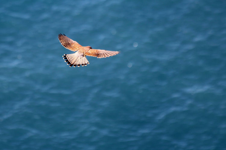 High angle view of falcon flying over sea