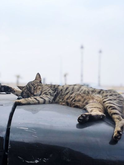View of a cat sleeping