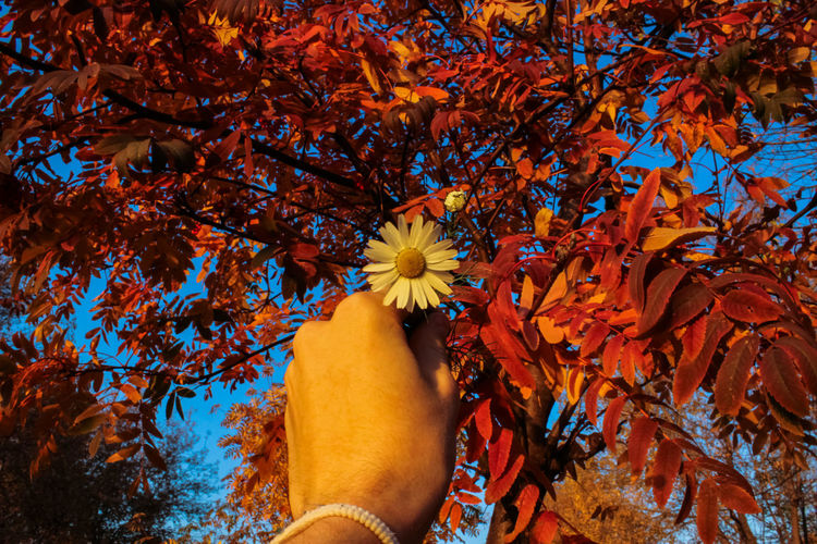 Cropped hand holding flower during autumn