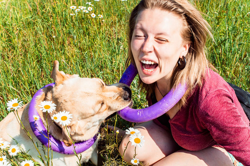A girl playing with a labrador retriever dog on the summer field with chamomilles