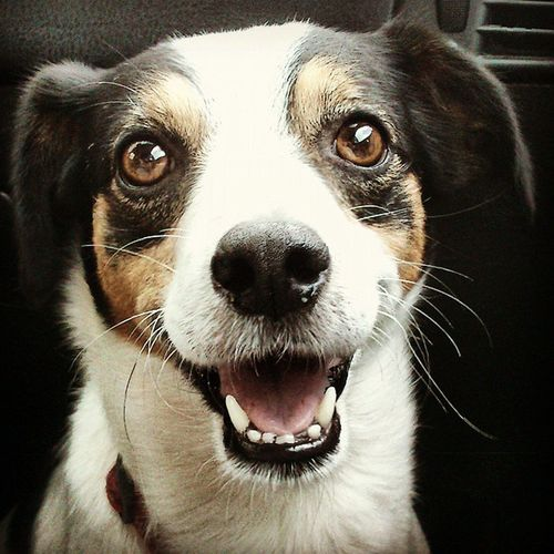 HappyClaudio. Happiness Eyes Dog Dogoftheday puppies pet smile friend love doglife sweetness Ilovemydog pettherapy igersItalia igersAbruzzo igersTeramo