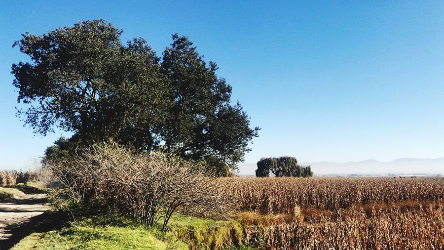 Countryside Landscape_Collection Mexico De Mis Amores Estado De México Nature Scenics Outdoors Color Of The Autumn Peaceful