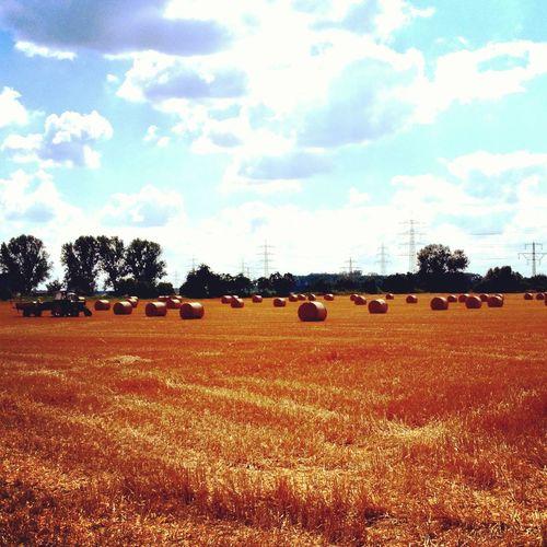 Farm Pfungstadt Harvest Ernte