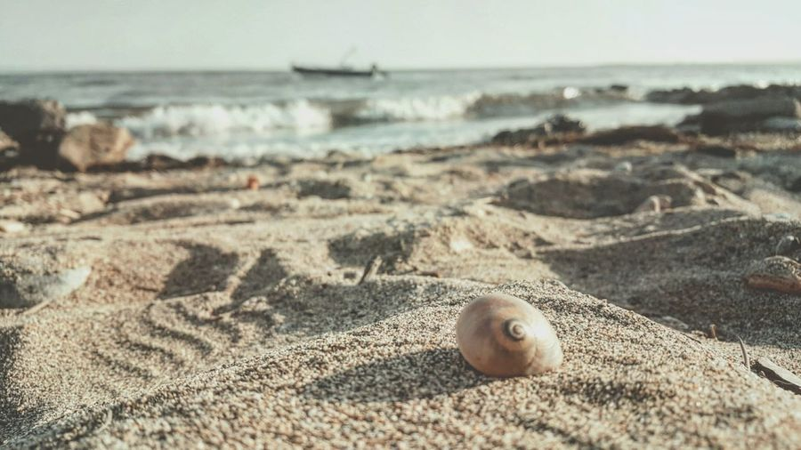 Shell at beach on sunny day