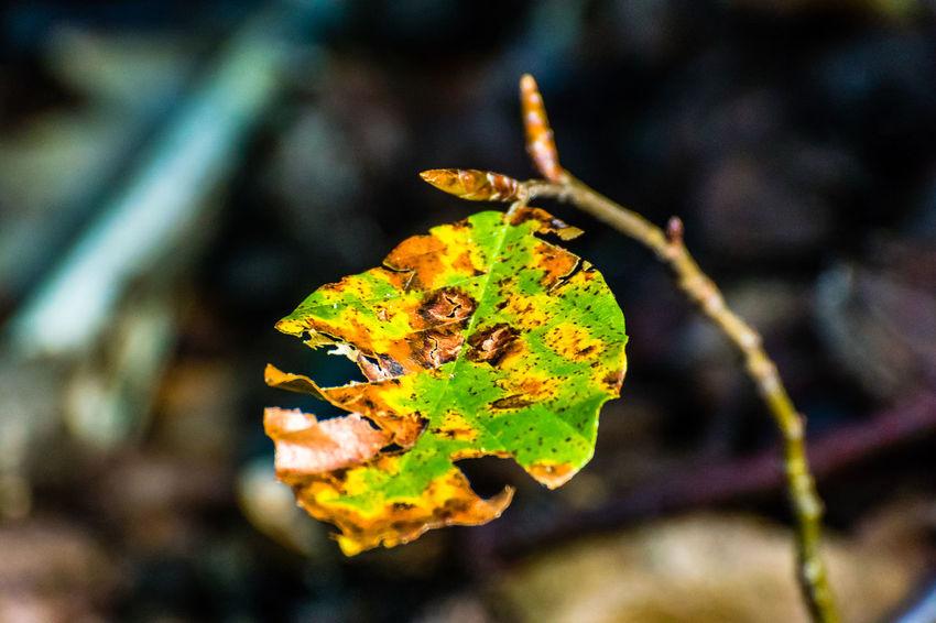 Arosio Autumn Autumn Colors Autumn Leaves Autumn🍁🍁🍁 Chestnut Colors Of Autumn Herbst Mushrooms Tessin Ticino