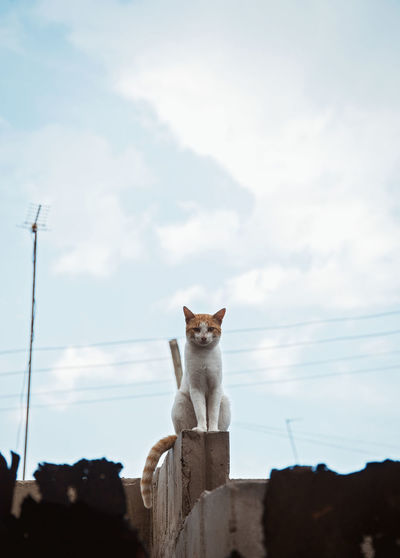 Cat On A Block Possing Cat Mammal Animal Themes Animal One Animal Pets Domestic Domestic Animals Vertebrate Cloud - Sky Sky Domestic Cat Feline No People Low Angle View Day Nature Sitting Looking At Camera Outdoors Whisker