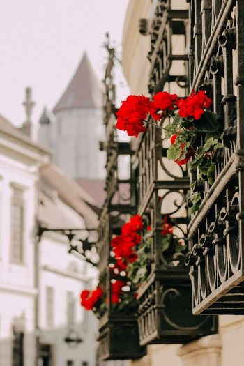 Low angle view of red flowering plant against building