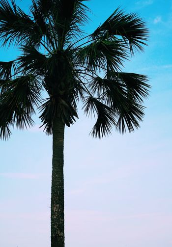 Tropical palm tree Sky Tree Plant Palm Tree Tropical Climate Low Angle View Tree Trunk Silhouette Day Coconut Palm Tree Cloud - Sky Tall - High Nature Beauty In Nature Outdoors Growth Tranquility No People Leaf Trunk