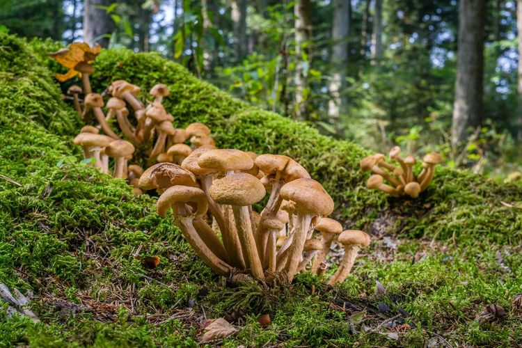 Forest Blackforest Germany Plant Tree Growth Nature Land No People Forest Green Color Beauty In Nature Day Mushroom Fungus Outdoors Focus On Foreground Moss Grass Mammal Field Vegetable Green Color Beauty In Nature Food Nature Growth Tree Land Plant