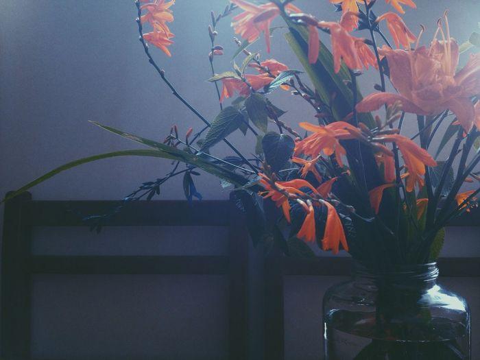 Flowers of July. Summertime EyeEm Nature Lover Vscocam