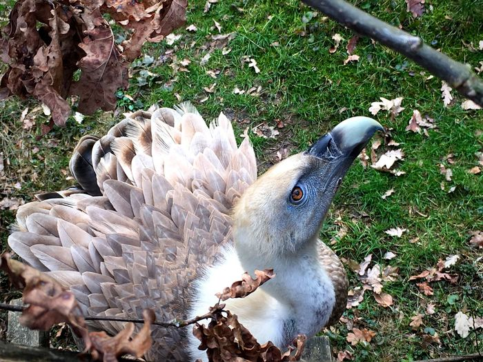 Showcase March Zoo Bird Eye Zoo Zlín Vulture Feathers Zlin Nature Bird Of Prey