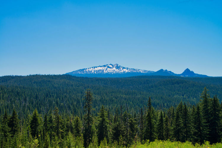 Diamond Peak in Oregon Beauty In Nature Blue Clear Sky Coniferous Tree Copy Space Day Environment Growth Idyllic Land Landscape Mountain Mountain Peak Nature No People Non-urban Scene Outdoors Pine Tree Plant Scenics - Nature Sky Tranquil Scene Tranquility Tree